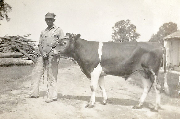 Pop and Cow